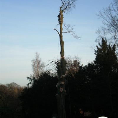Jardipol sprl  - Entretien de jardin